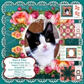 Black & White Kitten Cat In Among The Roses - Card Kit