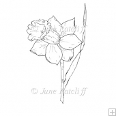 Single Daffodil - Digital Stamp