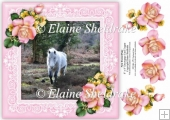 New Forest Pony 8 x 8 Floral Decoupage Card Topper