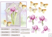 Pink Iris and butterfly 6x6 card