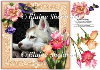Husky Dog At Home (2) 8 x 8 Floral Decoupage Card Topper