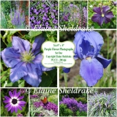 "Ten 8"" x 8"" Individual Purple Flower Photographs Set 1 - CU/PU"
