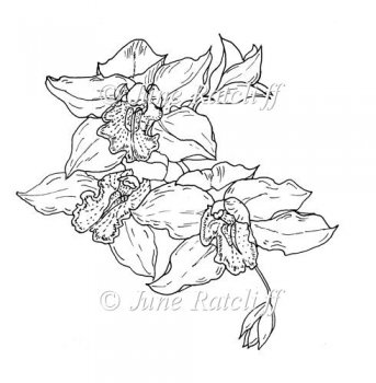 Orchid Line Drawings http://www.card-making-downloads.com/index.php?main_page=product_info&cPath=156&products_id=20632