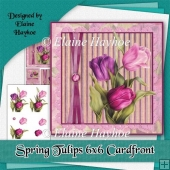 Spring Tulips 6x6 Cardfront