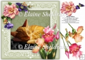 Sleepy Ginger Kitten 8 x 8 Floral Decoupage Card Topper