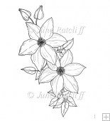Clematis spray Digital Stamp/Lines Art