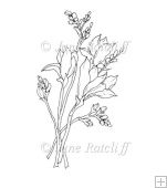Freesia Stems