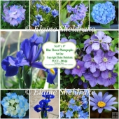 "Ten 8"" x 8"" Individual Blue Flower Photographs - Set One"