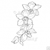 Orchid Spray - Digital Stamp