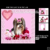 Shih Tzu Love Is In The Air