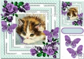 pretty kitten in polkadot frame with purple roses 8x8