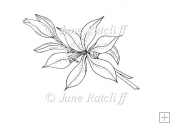 A Lily Spray Digital Stamp