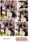 playful collie puppy with ball in the park Pyramids