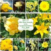 "Ten 8"" x 8"" Individual Yellow Flower Photos Set One PU/CU 300dpi"