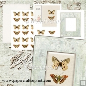 RTP Box Frame Butterflies(Retiring in August)
