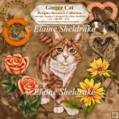 Ginger Cat - Designers Resource - CU PNG 300 DPI