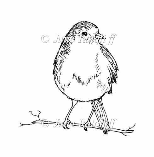 Line Drawing Robin : Robin on a twig digital stamp £ instant card